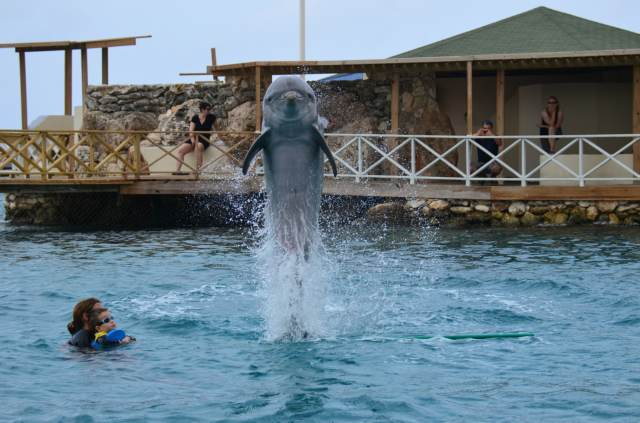 Delphintherapie Curacao 2014: Bild 28 von 66