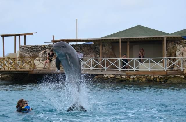 Delphintherapie Curacao 2014: Bild 29 von 66