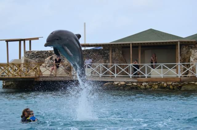 Delphintherapie Curacao 2014: Bild 30 von 66
