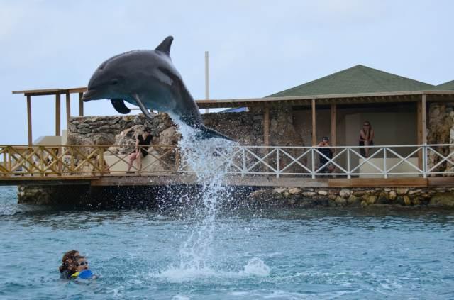 Delphintherapie Curacao 2014: Bild 31 von 66