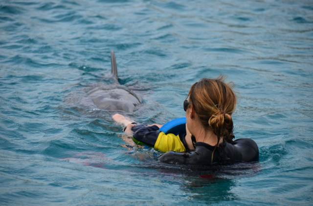 Delphintherapie Curacao 2014: Bild 34 von 66