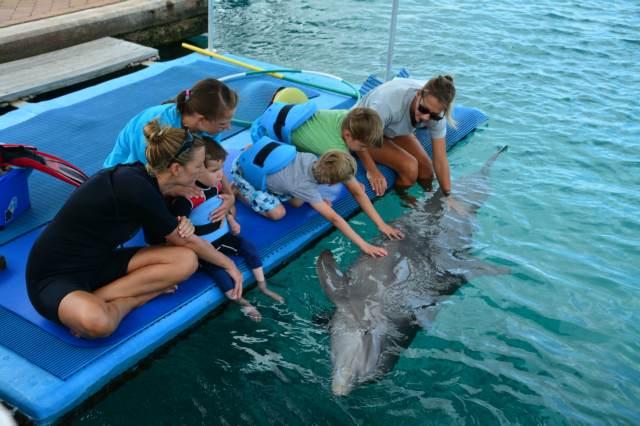 Delphintherapie Curacao 2015: Bild 7 von 47